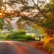 Wooded English country lane at sunset — Stock Photo
