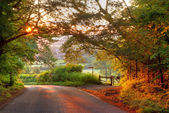 Wooded English country lane at sunset — ストック写真