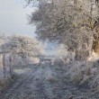 Hoar frost, England — Stock Photo