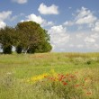 Постер, плакат: Painterly meadow background