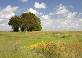 Painterly meadow background — Stock Photo