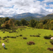 Stock Photo: Loughrigg Fell, Cumbria