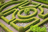 Topiary knot garden — Stock Photo