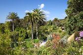 Jardins da abadia, tresco — Fotografia Stock
