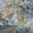 Stock Photo: Hoar Frost, Cotswolds