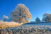 English farmland in winter — Foto Stock