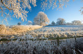 English farmland in winter — Stock fotografie