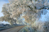 Hoar Frost, Cotswolds — Stock Photo