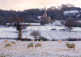 Rural Cotswolds in winter — Stock Photo