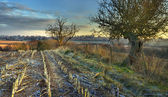 Worcestershire farmland in winter — Stockfoto