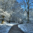 Worcwestershire woodland in winter — Stock Photo