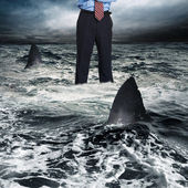 Businessman surrounded by shark — Stok fotoğraf
