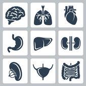Vector internal organs icons set — Stock Vector
