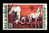 Postage stamps Horses — Stock Photo