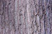 Texture shot of brown tree bark, filling the frame — Stock fotografie