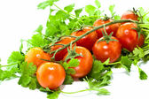 Tomatoes with cilantro leaves — Stock Photo