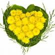 Heart of dandelions on a background of leaves — Stock Photo