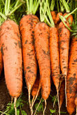 Fresh organic carrot — Stock Photo