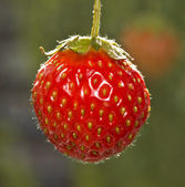 Strawberries on a green background — Stock Photo