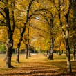 Beautiful autumn road in the park — Stock Photo