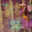 Stock Photo: Autumn leaves over rusty metal background