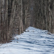 Winter Trail in the Woods — Photo