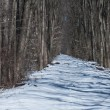Winter Trail in the Woods — Stockfoto