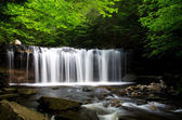 Waterfall in the Forest — Foto de Stock