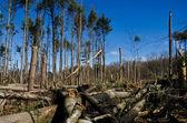 Fallen Forest — Stock Photo