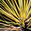 Pine Needles — Foto de stock #37207475