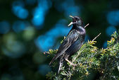 European Starling Perched in a Tree — Stock Photo