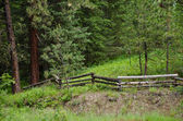 Fence in the Forest — Stock Photo