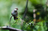 Curious Ruby-Throated Hummingbird Perched in a Tree — Stock Photo