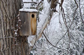 Wooden Birdhouse after a Fresh Snowfall — Stock Photo