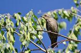 Bird Resting on a Branch — Stock Photo