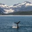 Baby Humpback in Front of Glacier — Photo