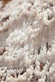 Close up and detail of Salt, Maras, Peru, South america — Foto Stock