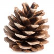 Stock Photo: Pine cones isolated on white