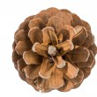 Pine (cedar) cone-blow — Stock Photo