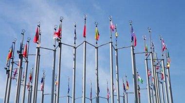 Flaggor i europa — Stockvideo