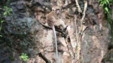 Thailand. monkeys — Stock Video