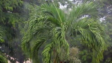 Thailand. tropical rain — Stock Video