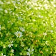 Stock Photo: Airy white flowers