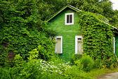 Green cottage — Zdjęcie stockowe