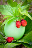 Strawberry in bright eggshell — Stock Photo