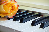 Beautiful Music Togethe — Stock Photo