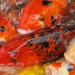 Stock Photo: Koi Fish Series 07