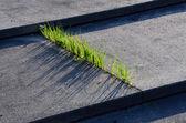 Grass and Concrete — Stock Photo
