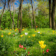 Mystic forest with flowers — Stock Photo