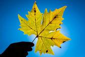 Maple leaf güneş karşı — Stok fotoğraf